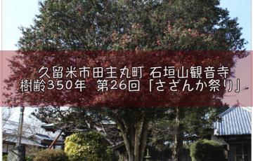 久留米市指定天然記念物 「第26回 さざんか祭り」開催!田主丸町 石垣山観音寺