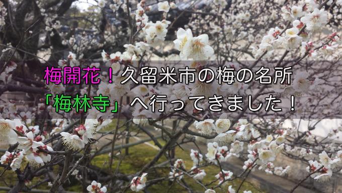 梅開花!久留米市の梅の名所「梅林寺」へ行ってきました!