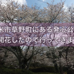 久留米市草野町にある発心公園の桜が開花したので行ってきました!
