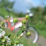 第35回くるめ緑の祭典「緑のサイクリング」筑後川サイクリングロードで楽しもう!