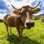 久留米の自然・実り・食・農業にふれあえる「第42回 ふるさとくるめ農業まつり」