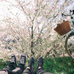 サクラを愛でながら自転車を楽しもう!久留米 サイクルファミリーパークさくらまつり