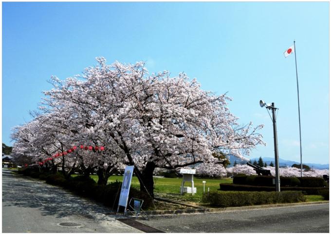 陸上自衛隊久留米駐屯地 観桜期に伴い駐屯地を一般開放!3月26日