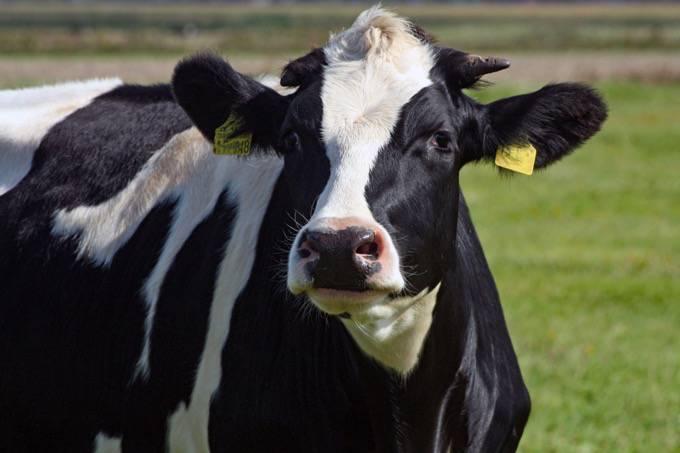 春の乳牛コンテスト「第30回久留米スプリングショー 」牛乳の無料配布やロールラップへの落書き体験