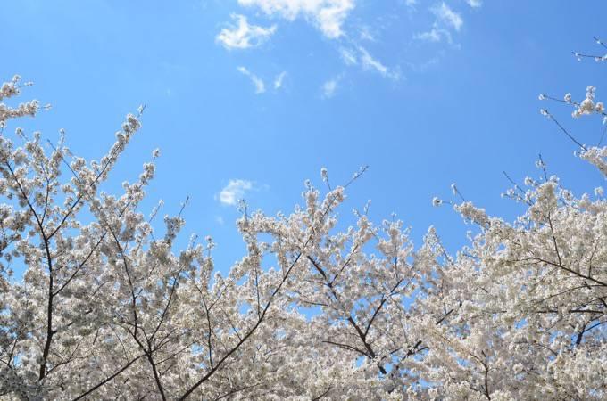 四季折々の植木、盆栽、鉢物、園芸資材『くるめ緑花センター春の植木まつり』