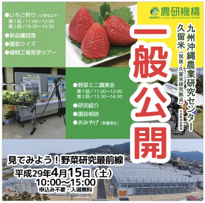 イチゴ狩り体験、園芸クイズ!九州沖縄農業研究センター(久留米) 一般公開