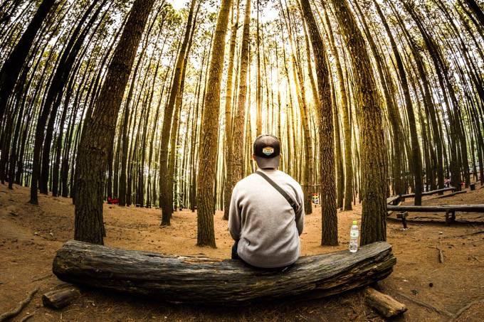 木工体験や丸太切り競争!久留米市田主丸町「グリーンフェスティバル2017」
