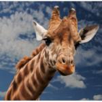 大牟田市動物園5月3日(水・祝)~5月7日(日)中学生以下 入園無料に!開園時間を延長