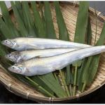 日本では筑後川のみ生息するエツが食べられる!久留米市城島町「第14回 城島エツ祭」