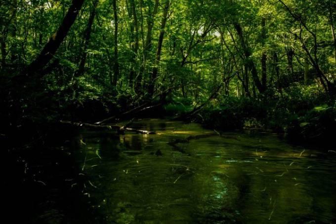 夏の始まりを告げる風物詩 多くのホタルが乱舞する!「第30回ほたる祭 棚田親水公園」