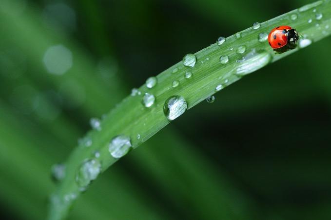 久留米市 梅雨入り 九州北部と山口 九州南部が梅雨入り