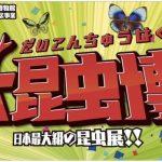 日本最大級の昆虫展が福岡県に上陸!「大昆虫博」ナイトミュージアムも開催!