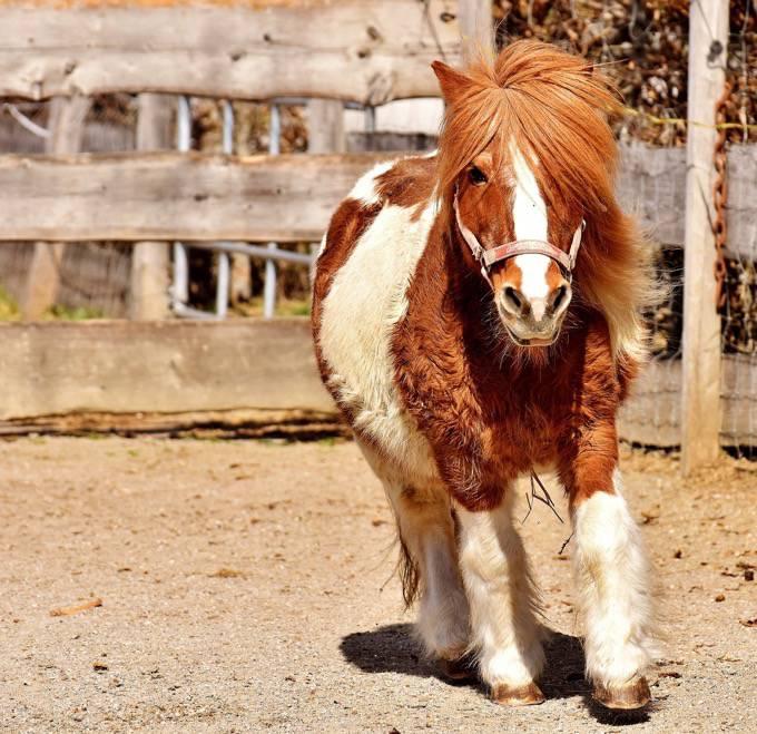 シュロアモール筑紫野に動物園がやってくる!体験乗馬・動物ふれあい体験