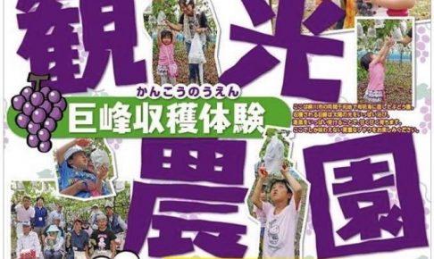え?柳川で?観光ぶどう園「むつごろうファーム」巨峰狩り!8月オープン