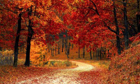 宝の山高良山もみじ狩り 歴史ある高良大社の紅葉!江戸時代から続く紅葉の名所!