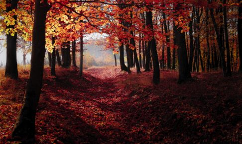 緑のハイキング「第36回くるめ緑の祭典」美しい紅葉を楽しもう!