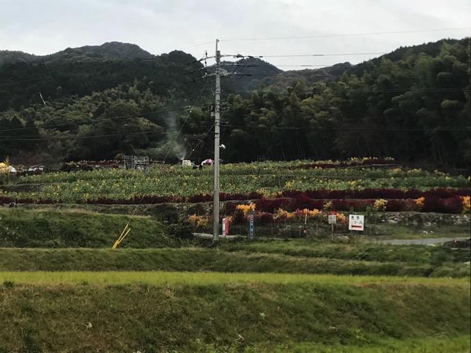 山田ひまわり園【みやき町】遠目