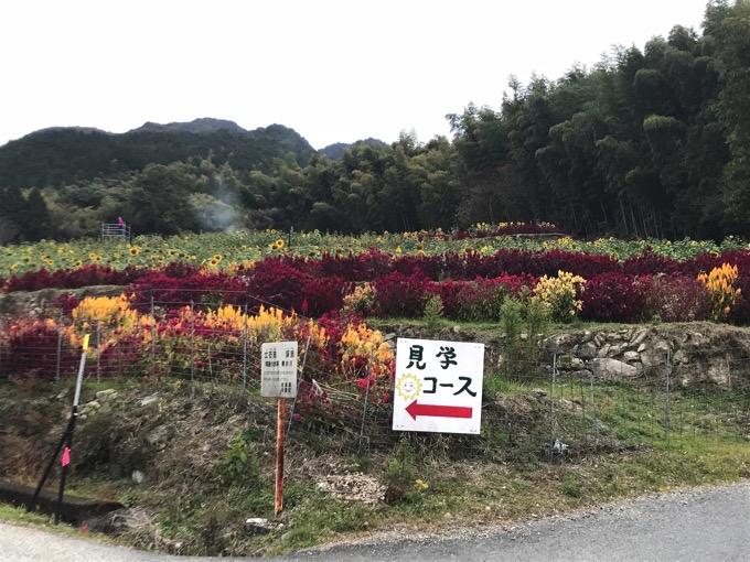 山田ひまわり園【みやき町】見学コース