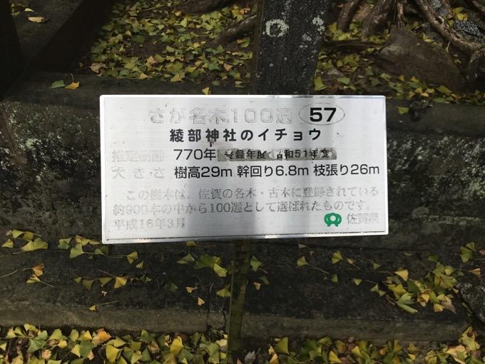 みやき町 綾部神社 さが名木100選 樹齢700年イチョウ3