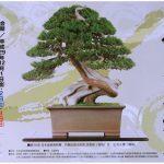 日本盆栽青樹展 日本の香り高い芸術「盆栽」の展示会
