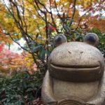 小郡市 如意輪寺(かえる寺)紅葉の美しさにうっとり!カエデの名所へ行ってきた