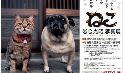 岩合光昭 写真展「ねこ」岩田屋久留米本店で開催!BS 世界のネコ歩き動物写真家