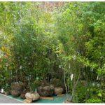 第13回久留米植木まつり 植木苗木の業者が一堂集結 展示即売