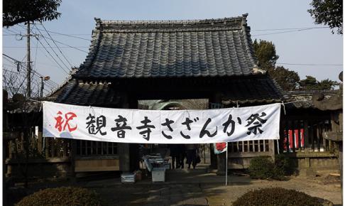 久留米市 石垣山観音寺「さざんか祭り」樹齢350年のハルサザンカ