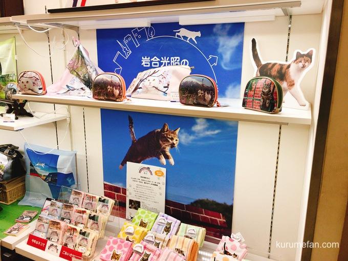 岩合光昭 写真展「ねこ」 岩田屋久留米店 1階