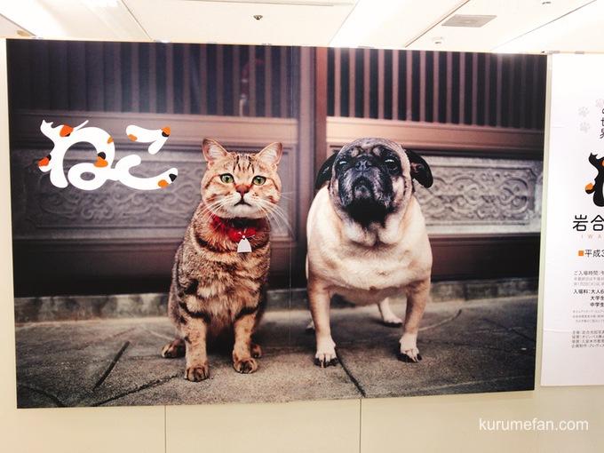 岩合光昭 写真展「ねこ」 岩田屋久留米店 入口