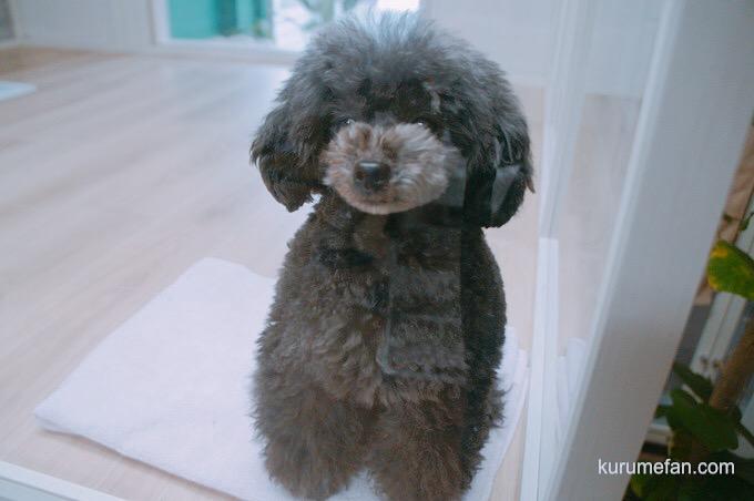 ドッグサロン ワンコdeワンコ ドックラン内の犬