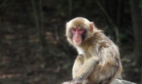 福岡県八女市長野 大型の猿が出没!近づかないよう注意