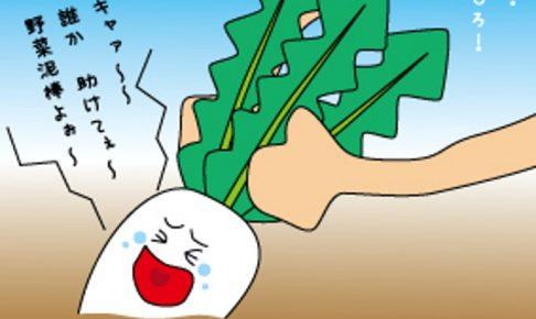 みやき町で野菜泥棒 畑から白菜500個!野菜高騰による転売目的か!?
