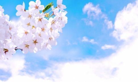 石橋文化センター 約150本の桜が咲き誇る「春の花まつり2018 SAKURAまつり」