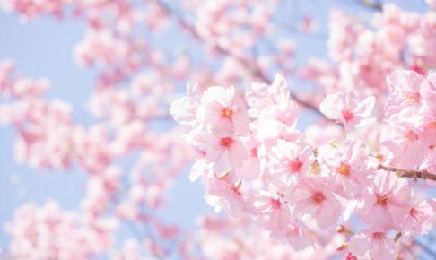 久留米市荒木町「鷲塚公園 桜まつり」約150本 夜桜も楽しめる