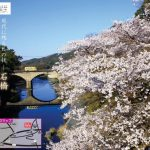 八女市「桜と石橋まつり」600本の桜と石橋の共演!イベントや夜桜ライトアップ
