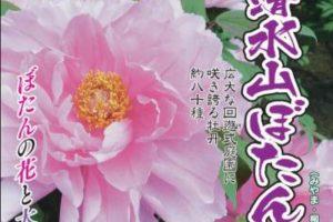 「清水山ぼたん園」九州最大級の広さ、約80種の牡丹が咲き誇る【みやま市】