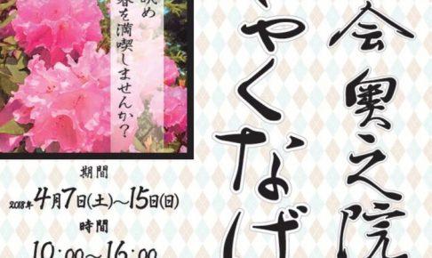 八楽会奥之院「しゃくなげまつり」1000株のしゃくなげ咲き誇る!