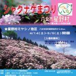 八女市星野村「ミヤシノシャクナゲまつり」約5千本の筑紫シャクナゲ!