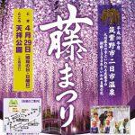 樹齢1300年の大藤「藤まつり」九州最古のお寺 武蔵寺 長者の藤