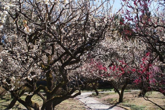 久留米市 梅林寺外苑 境内の梅