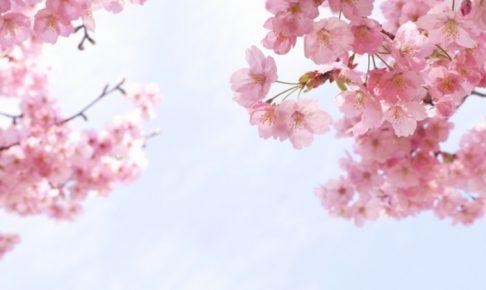 城島町民の森公園桜まつり 約200本の桜!ステージで踊りや歌を開催