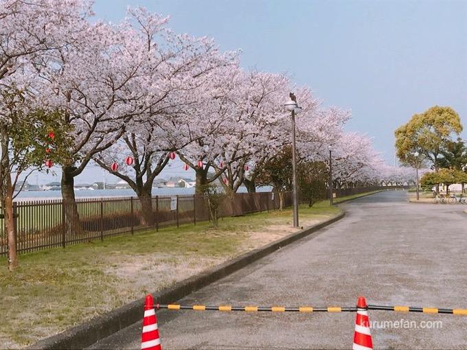 久留米市南部浄化センター 桜