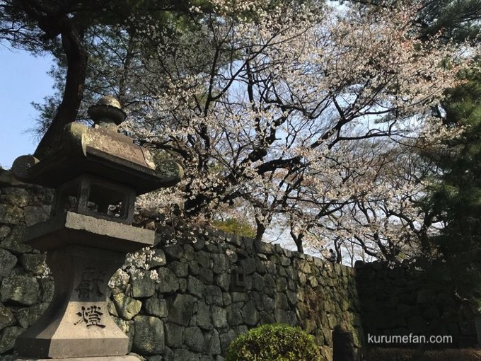 久留米城跡(久留米市篠山町)桜