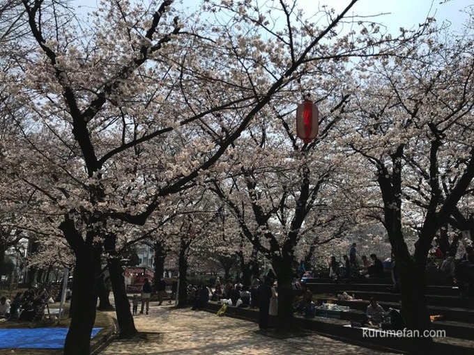 小頭町公園(久留米市小頭町)桜