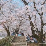 小頭町公園、久留米城跡、鷲塚公園の桜を花見!【久留米市花見巡り】