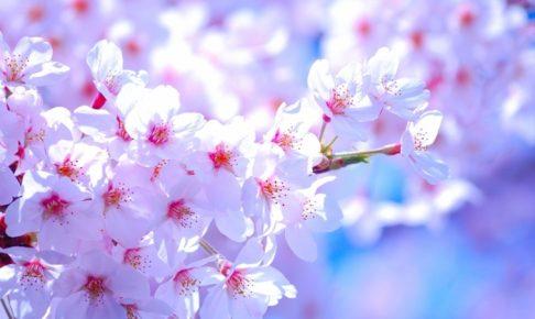 道の駅くるめ「桜まつり」田中製麺試食販売会やひょっとこ踊り開催