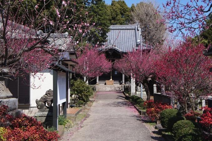 久留米市 宮ノ陣神社 境内入り口の梅