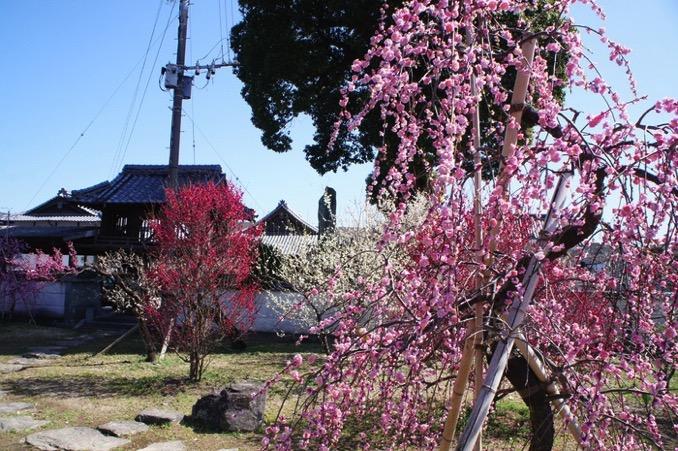 久留米市 宮ノ陣神社の梅