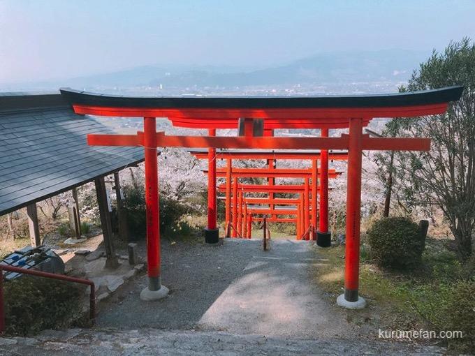 浮羽稲荷神社 鳥居と桜